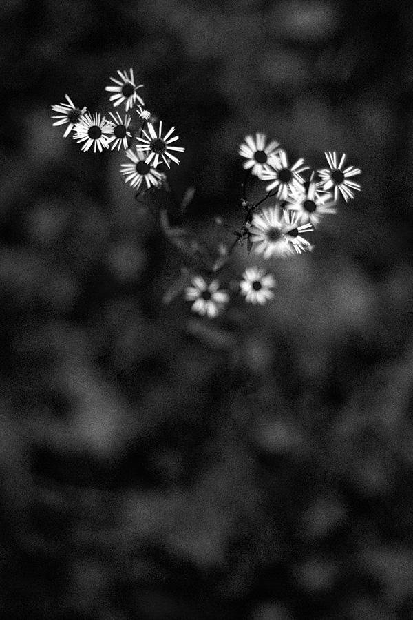 Kwiaty zła